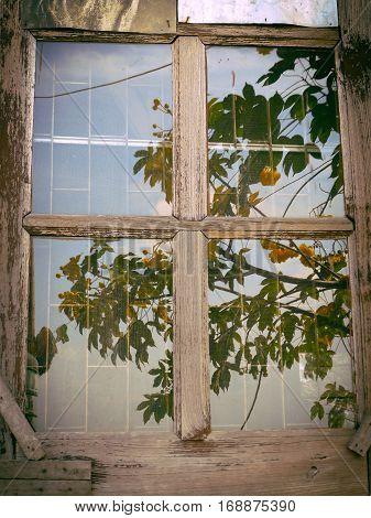 Old wooden window / Moldy window /