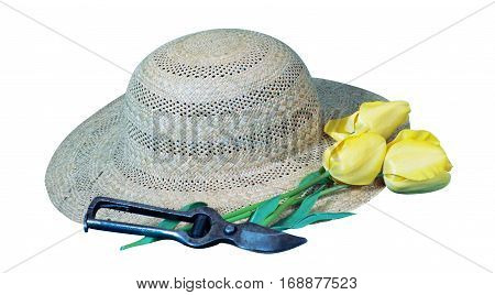 Gardener's hat yellow tulip flower and secateur still life isolated on white background