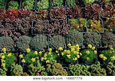 segment from plant fair