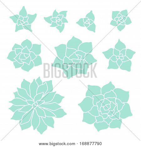 Teal Succulent Plant Set On White Background