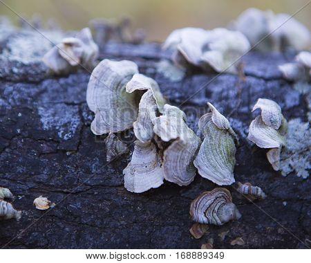 Tree Lichen on a fallen piece of wood