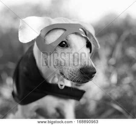 Dog Costume Breed Canine Friend Mammal Animal
