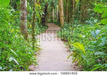 Walkway Lane Path With Green Trees in Forest. Beautiful Alley road in park in thailand
