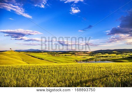 Tuscany spring Siena countryside wheat fields small lake and pine tree. Italy Europe.