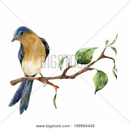 Watercolor bird sitting on tree branch with leaves. Hand painted spring illustration with robin redbreast isolated on white background. Nature print for design