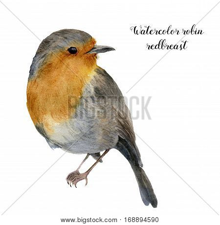 Watercolor robin redbreast. Hand painted illustration with bird isolated on white background. Nature print for design