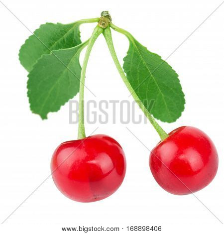 Ripe red cherry berries with green leaves on white background