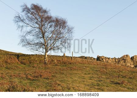 An image shot in the golden hour at Beacon Hill Leicestershire England UK