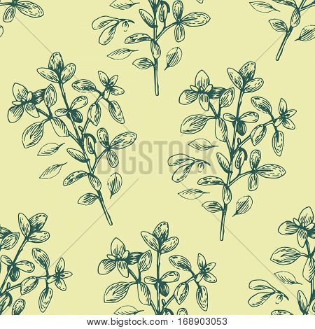 Vector hand drawn oregano illustration. Vintage oregano flower sketch. Botanical drawing