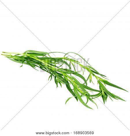 Green tarragon herbs isolated on white background