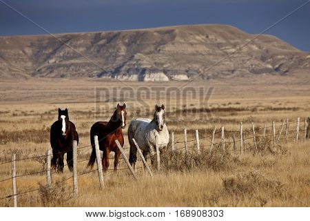Badlands Canada Saskatchewan Big Muddy horses in pasture