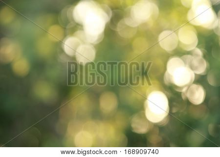 natural lighting tone of green blurred background