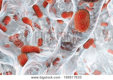 Biofilm of bacterium Acinetobacter baumannii, 3D illustration. Acinetobacter is antibiotic resistant rod-shaped bacterium which causes hospital-acquired infections