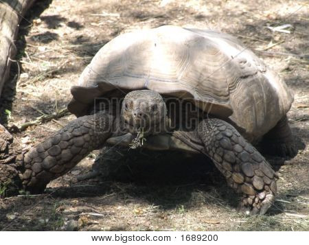 A very big and funny turtle in a park poster