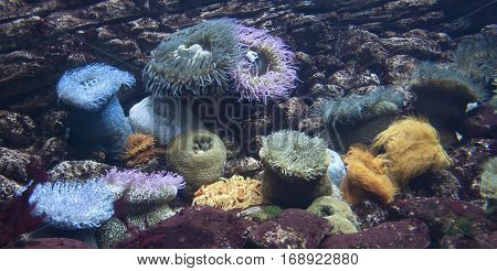 Group of colorful sea anemones close up