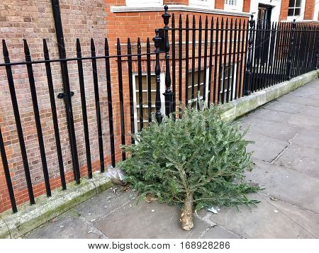 Used Christmas Tree dumped in a London Street after Twelfth Night