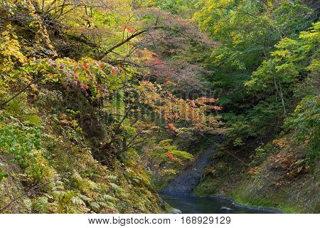 Naruko Gorge Autumn leaves
