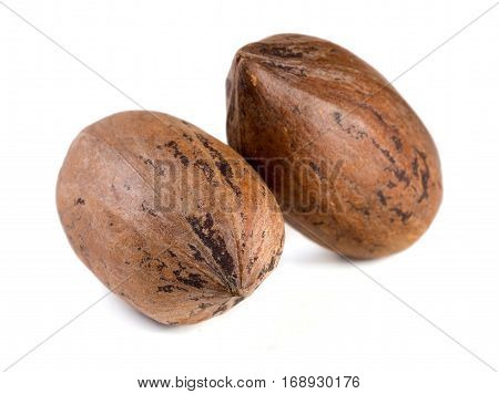 Two pecan nuts isolated on white background.