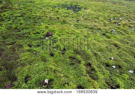 Beautiful green moss background. Close up. Pattern. The ground is covered with moss.