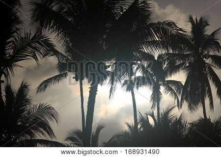 Forest palm trees, nature background at night