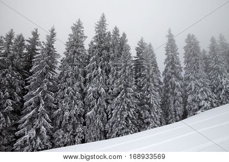 Frozen Winter Forest In Fog And Snow Slope For Freeride At Winter