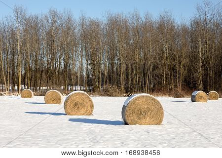Golden hay bales arranged in a snow covered winter field. Classic rural winter scene.