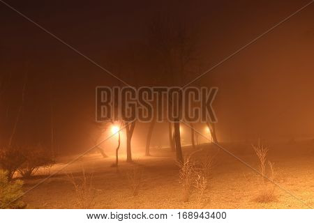 scary trees in the fog at night