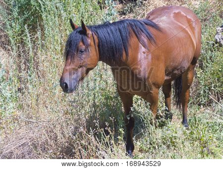 Horse on nature. Portrait of a horse brown horse