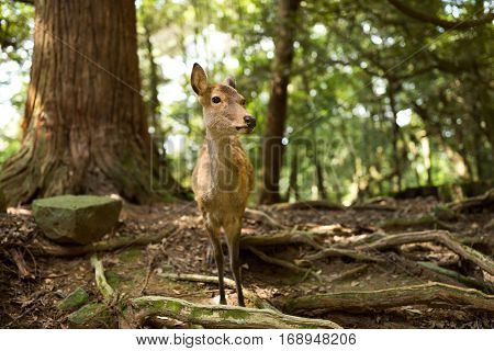 Wild deer at outdoor