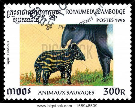 STAVROPOL RUSSIA - January 27 2017 : A Postage Stamp Printed in the Cambodia Shows Malayan tapir (tapirus indicus) circa 1996