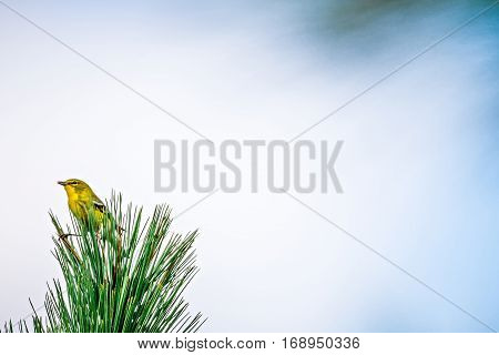 tiny bird perched on top of evergreen tree