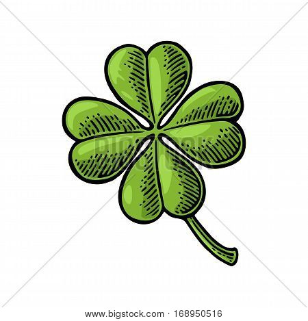 Good luck four leaf clover. Vintage color vector engraving illustration for info graphic poster web. Isolated on white background.