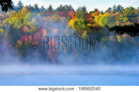 Heavy morning mist rises all around a wooded wetland marsh, enshrouding the area with fog.   Colorful, waterfront, mixed deciduous forest at a lakeside.