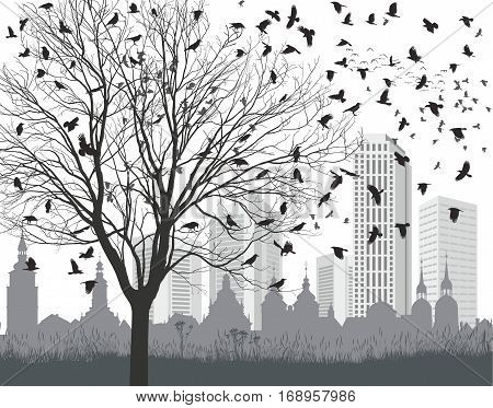 vector illustration flock ravens, tree without leaves and the old and new city