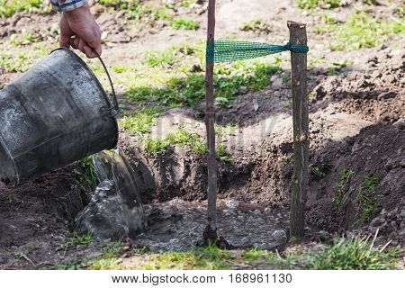 Watering fruit tree seedlings after planting into soil gardening step by step guide