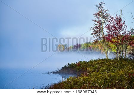 Late-summer, early-autumn morning.  Swirling of foggy mist rises from a lake into cool air.  Nature display of water states in front of colourful deciduous wetland forest in morning sunshine.