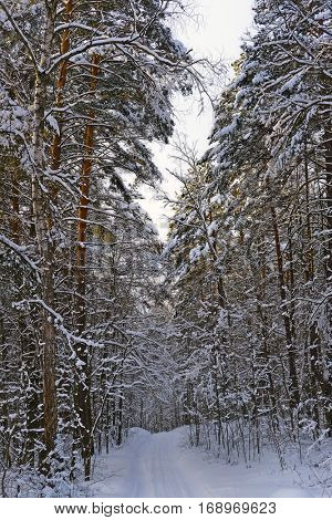 The image of a winter forest road