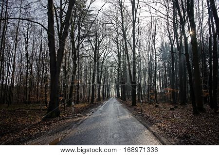 Country road after the rain leads through a light forest with bare trees
