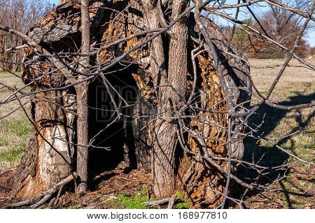 Old Dead Tree with a Hollow Interior