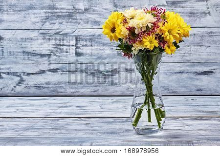 Bouquet of chrysanthemums in vase. Grey wooden background.