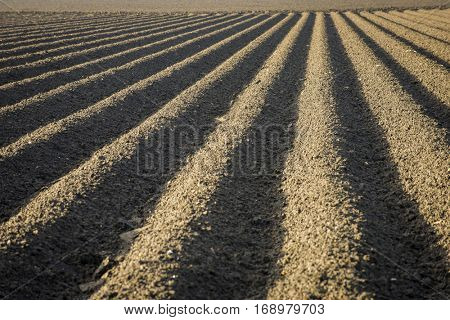 Rich fertile farm soil plowed tilled and ready for planting agriculture