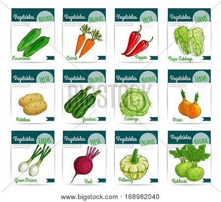 Vegetables cards. Vector price labels set of fresh farm organic veggies cucumber and carrot, bell or chili pepper and chinese napa cabbage, beet and patisony or pattypan squash, zucchini and kohlrabi. Vegetarian and vegan food sketch