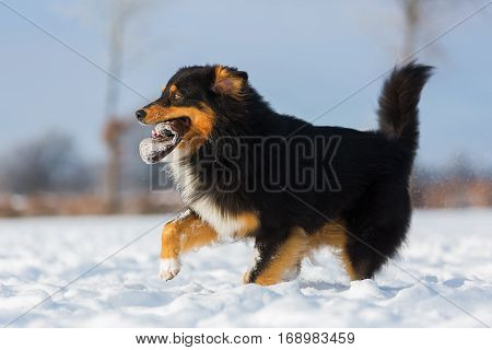Dog With Treat Bag Running In The Snow