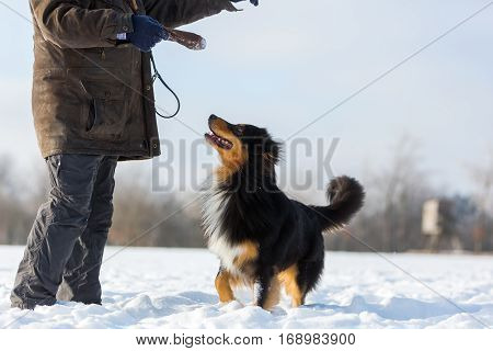 Man Is Playing With A Dog In Snow