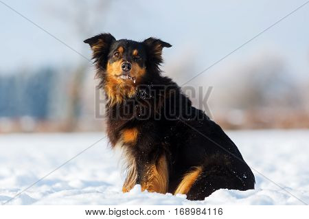 Dog Portrait In The Snow