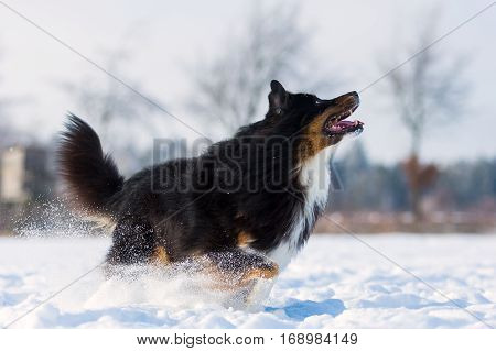 Dog Wants To Jump In The Snow