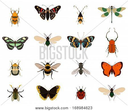 Colorful butterfly and bug insect collection isolated on white background vector. Swallowtail, ladybug, beetle, swallowtail, dragonfly, fly, bee, bumblebee, cockroach. Insect symbol. Funny insect with butterfly. Insect top view. Bug insect character