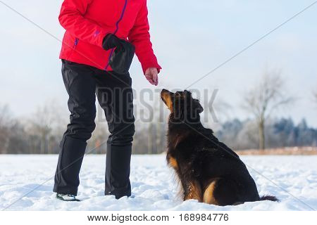 Woman Give A Dog In The Snow Feed