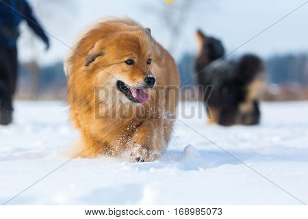 Dog With Others In The Snow