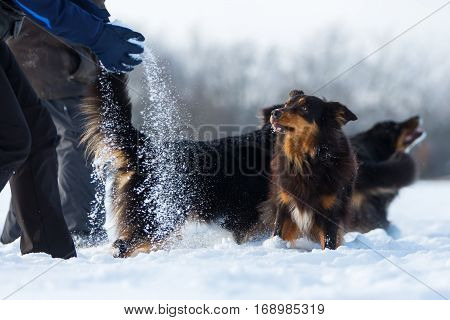 People Playing With Dogs In The Snow